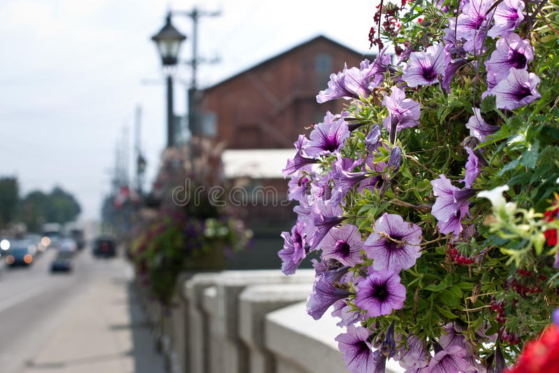 Cesta de suspensão da flor em uma ponte foto de stock