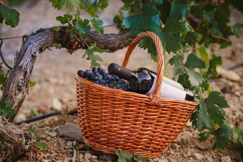 Cesta de uvas con una botella de vino en el viñedo foto de archivo