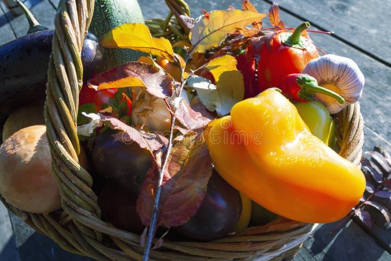 Cesta de verduras frescas en los rayos del sol poniente en el bosque fotos de archivo libres de regalías