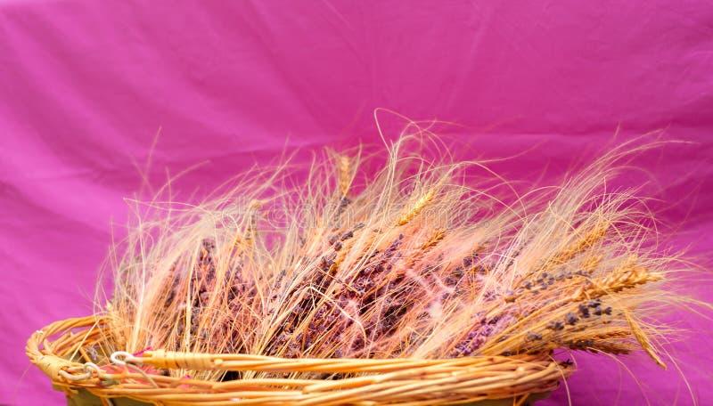 Cesta de vime com alfazema e trigo secado no fundo violeta fotos de stock