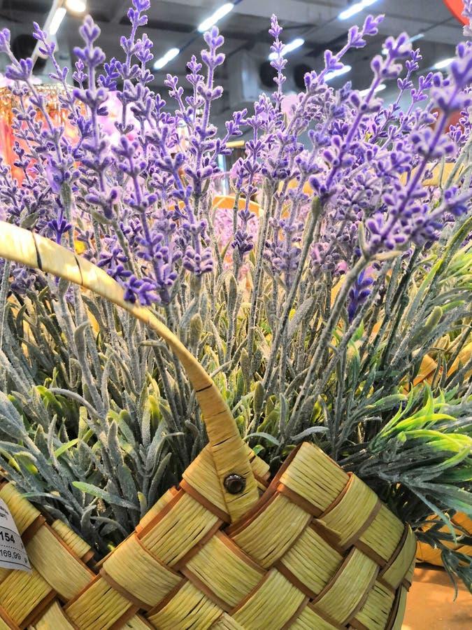 Cesta de vime com o close up das flores da alfazema sobre o c?rculo ?spero do campo da alfazema Alfazema em uma cesta de vime imagens de stock royalty free