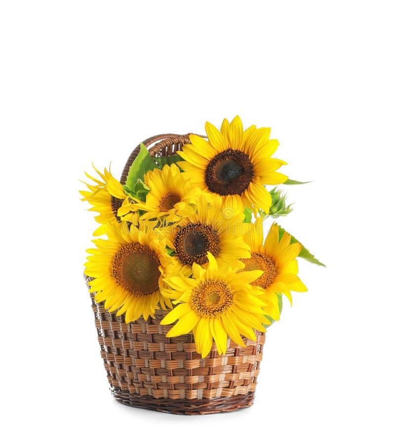 Cesta de vime com os girassóis amarelos bonitos fotos de stock