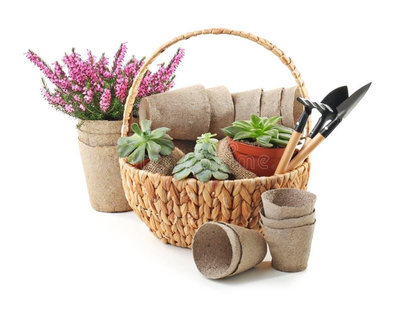 Cesta de vime com plantas, potenci?metros e ferramentas de jardinagem no fundo branco imagens de stock