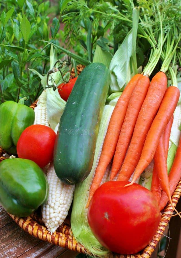 Cesta do vegetal imagens de stock royalty free