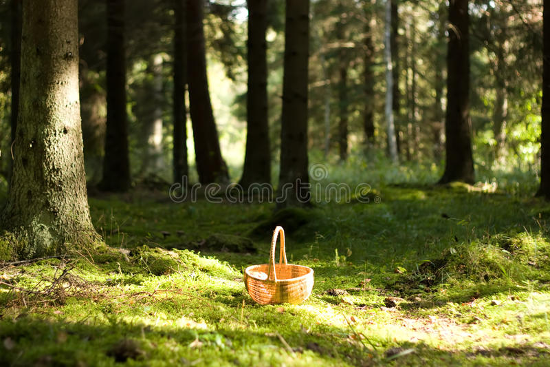 Cesta en un bosque asoleado de la seta fotografía de archivo