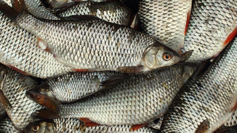 Cesta llena de los pescados vivos fotos de archivo