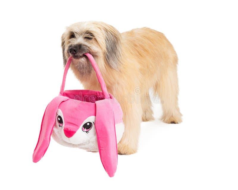 Cesta pirenaica e posição de Dog Holding Easter do pastor imagens de stock