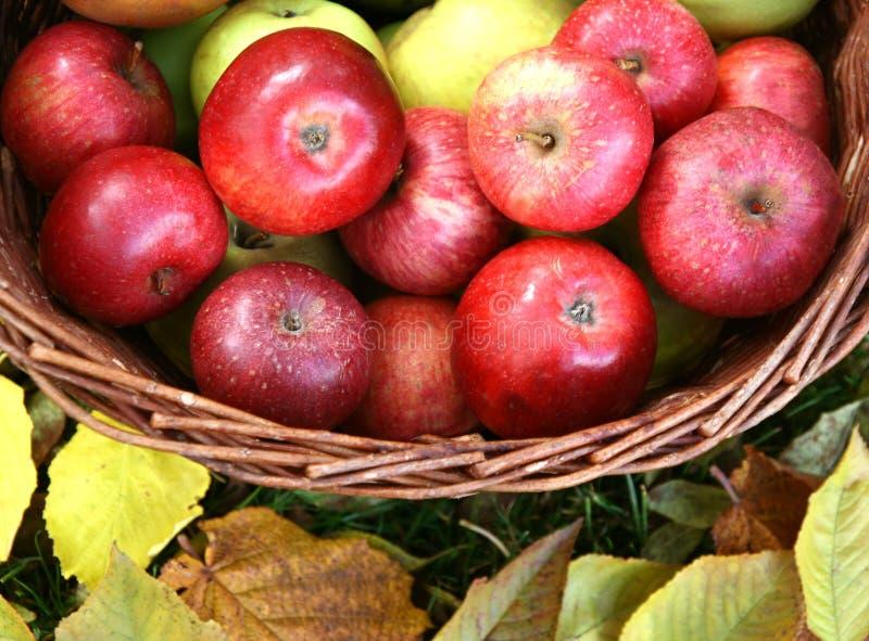 Cesta por completo de manzanas foto de archivo