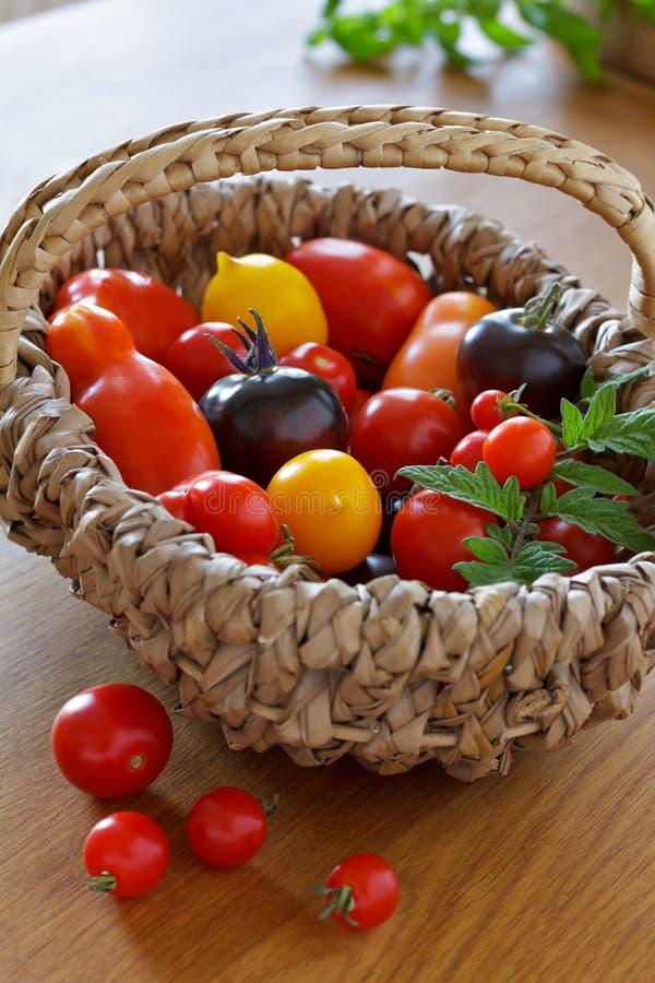 Cesta vieja colorida de las variedades del tomate imagenes de archivo