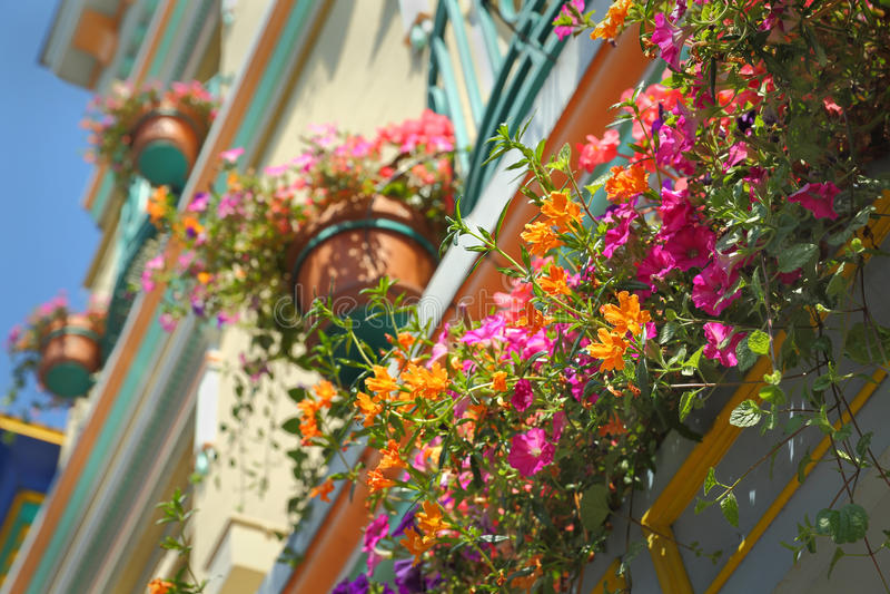 Cestas da flor, Victoria, BC imagem de stock royalty free