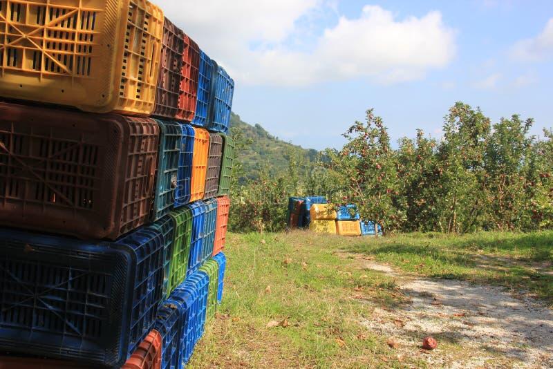 Cestas en campo de las manzanas fotografía de archivo