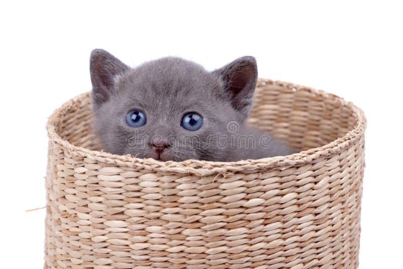 Cestino con il gattino fotografia stock libera da diritti
