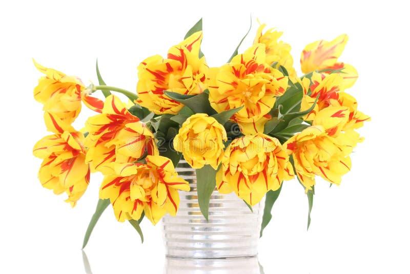 Cestino dei tulipani fotografie stock libere da diritti