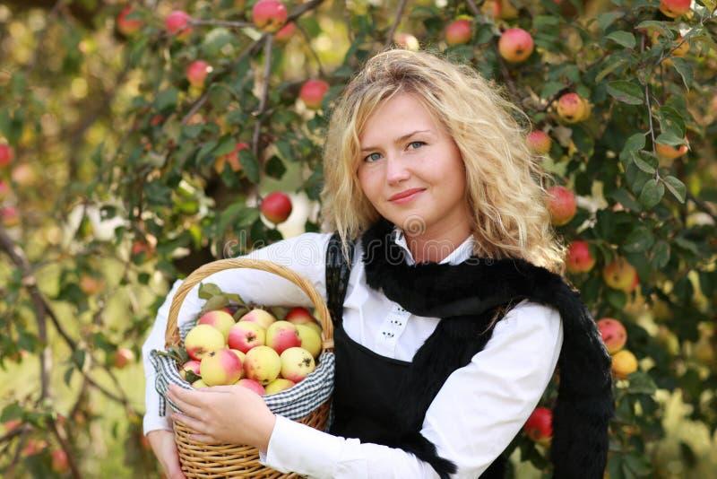 cestino della mela immagini stock