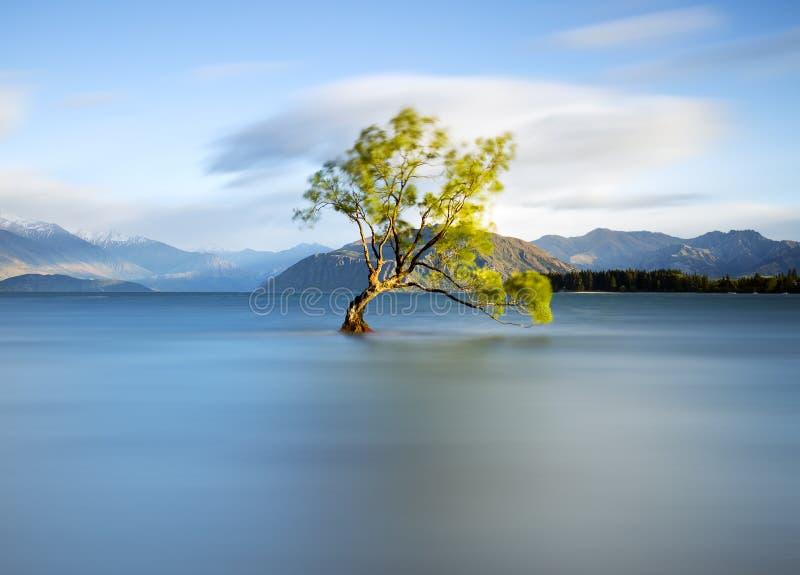 Cet arbre isolé photos libres de droits
