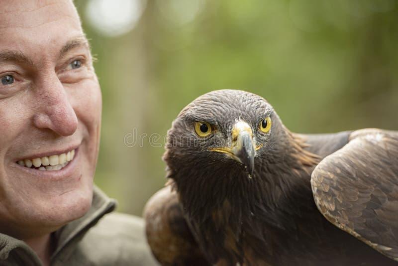 Cet Eagle d'or en partie d'un programme i d'élevage et de conservation photo stock