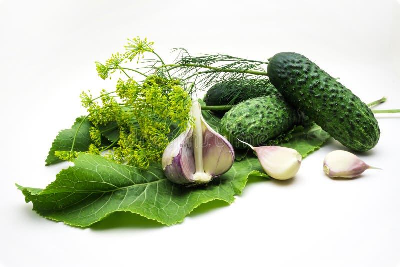 Cetrioli, aglio, aneto e rafano su backgr bianco fotografie stock libere da diritti