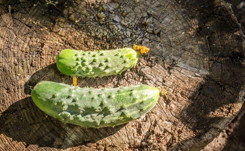 Cetriolo-cetriolini deliziosi sui precedenti di vecchie plance di legno Stile rustico di eco fotografia stock libera da diritti