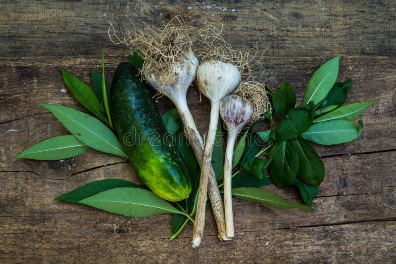 Cetriolo ed aglio in pianta immagini stock libere da diritti