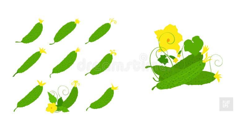 Cetriolo su un insieme bianco del fondo Stile piano molto semplice Cetrioli differenti in assortimento con le foglie e fiori gial royalty illustrazione gratis