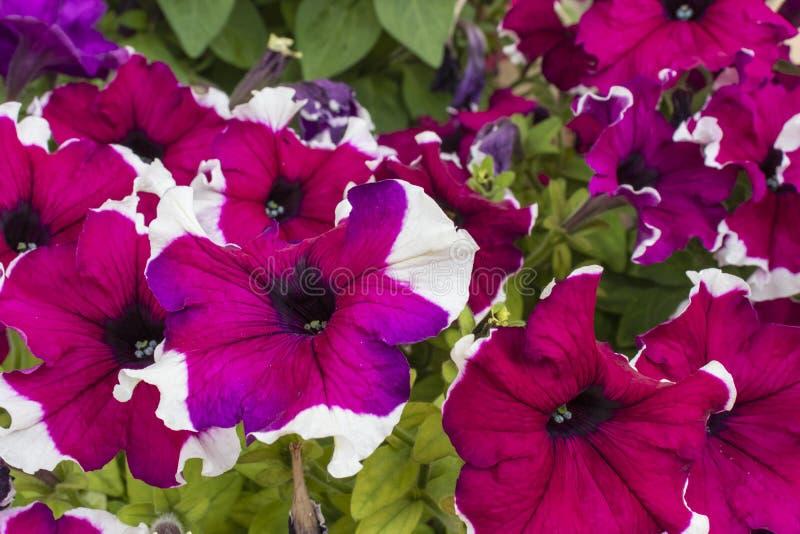 Cette photo montre beau, lumineux, horticulture d'été dans un parterre images stock