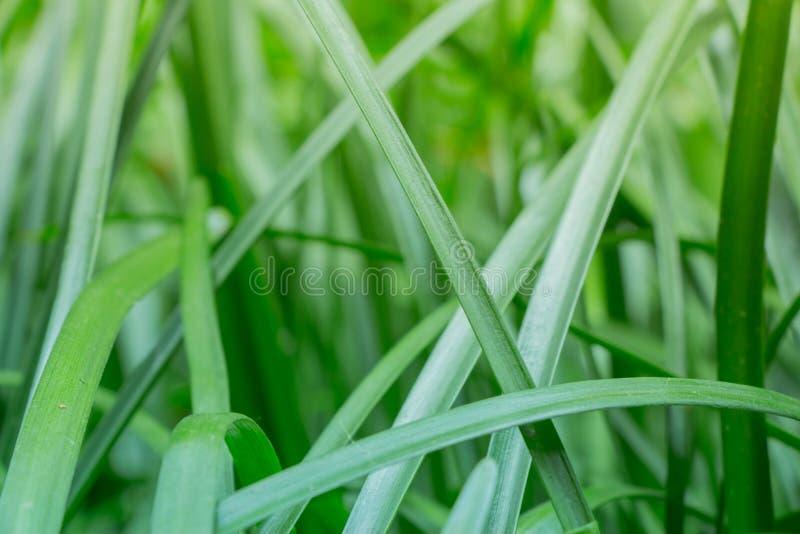 Cette photo religieuse d'un environnement vert luxuriant de jungle et herbe grande avec la lumière du soleil de matin affluant, e image stock