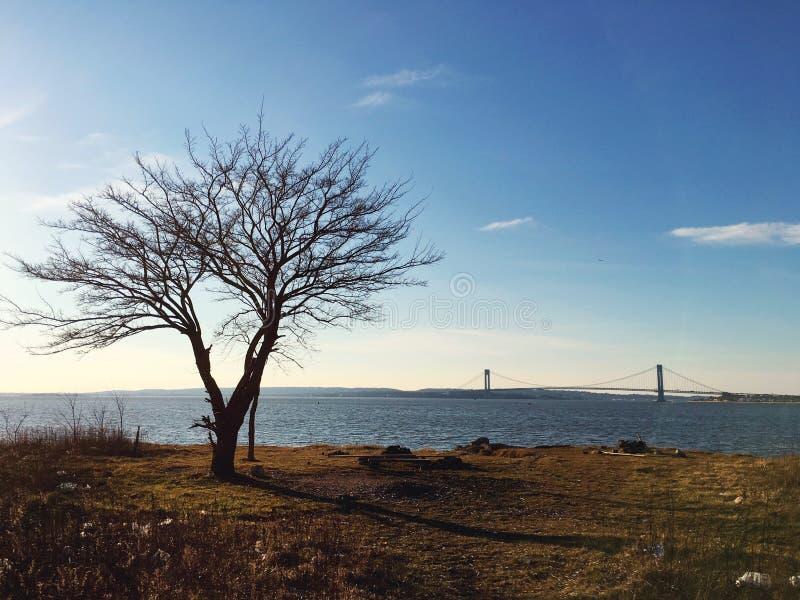 Cette vieille baie Brooklyn de New York d'arbre photo libre de droits