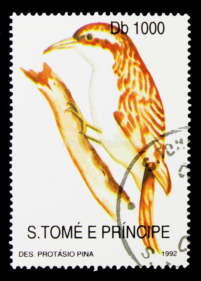 Cettis serie för sångare (den Cettia cettien), fauna- och flora, circa 199 royaltyfria bilder