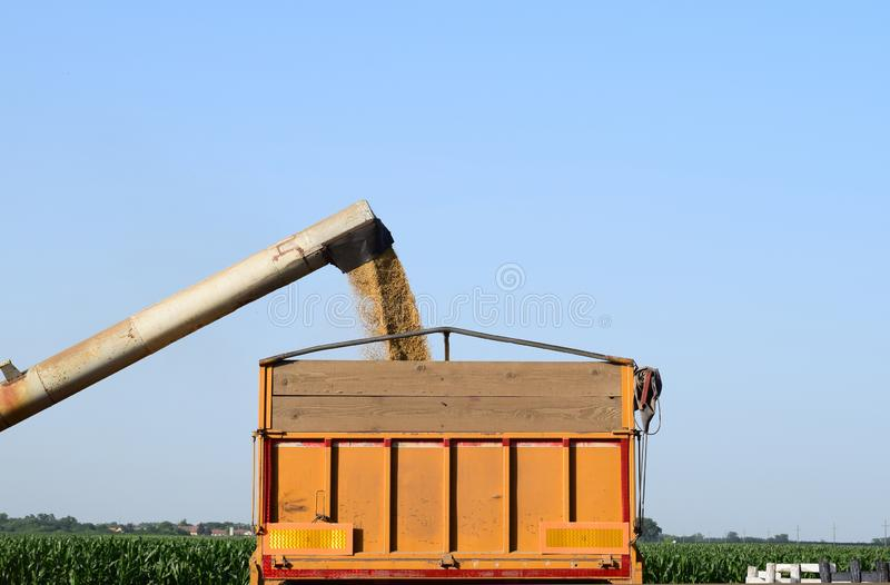Cevada de derramamento do descarregador no caminhão, Vojvodina, Sérvia fotografia de stock royalty free