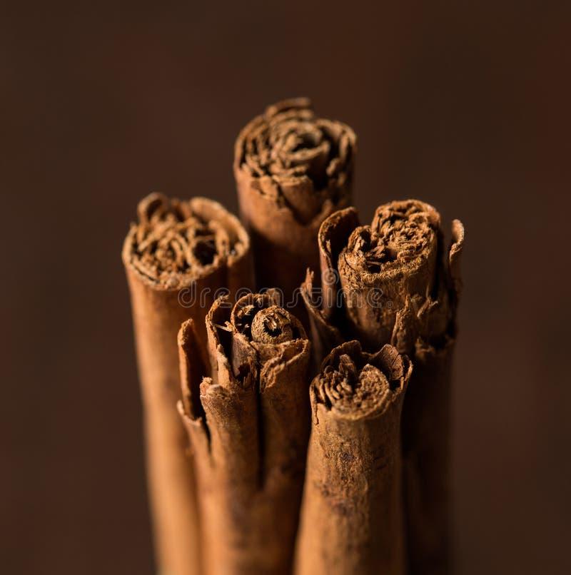 Ceylon cinnamon sticks stock photo