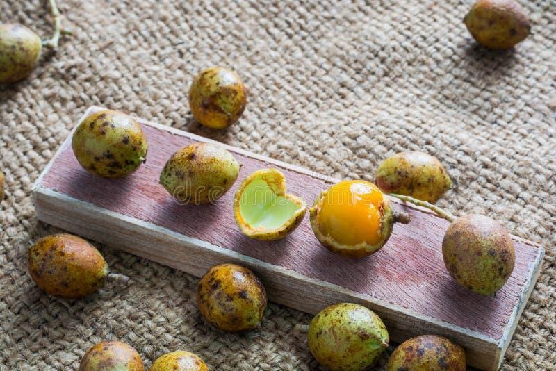 Ceylon dąb (Schleichera oleosa (Lour ) Merr ) Owocowy laxative pro obrazy stock