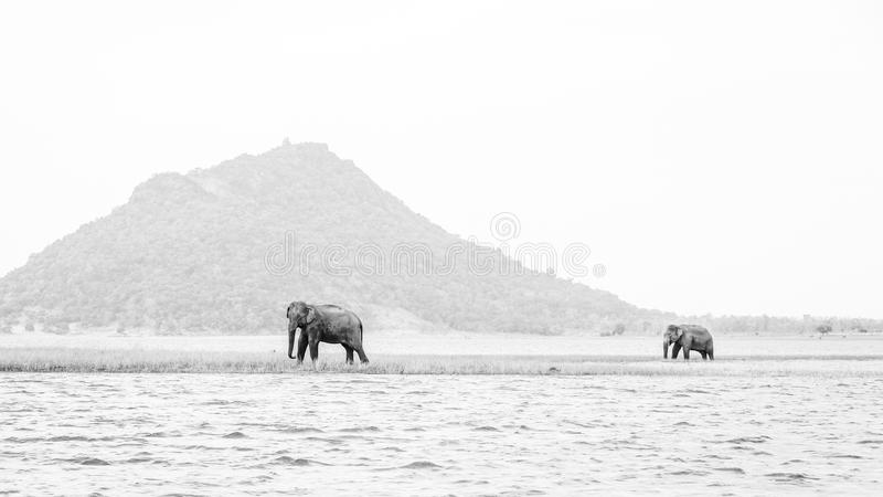 Ceylon , The land of elephants stock photography