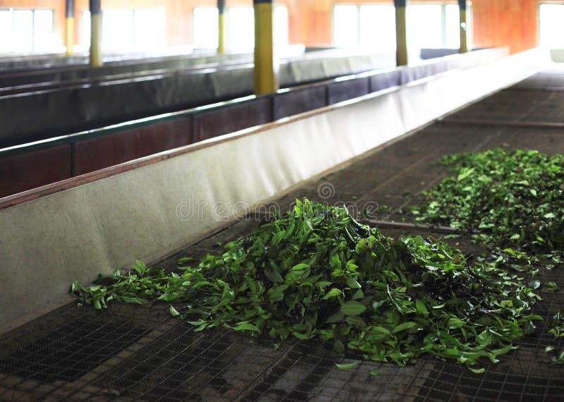 Ceylon tefabrik arkivbilder