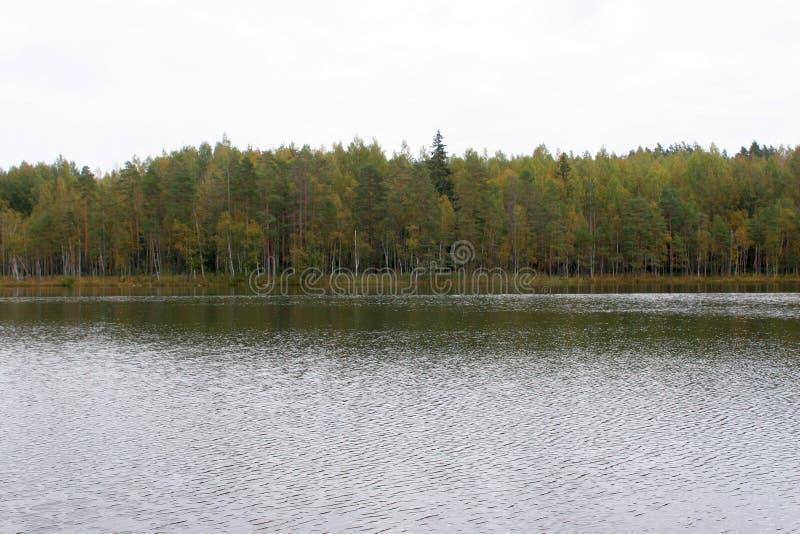 Chá à proximidade das florestas do russo, após uma pesca bem sucedida imagem de stock royalty free