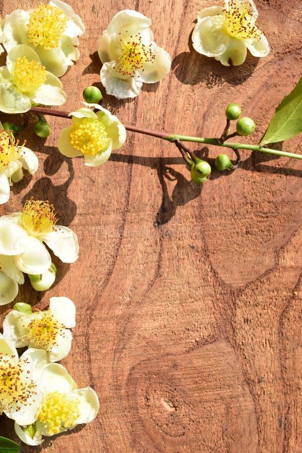Chá bonito da flor foto de stock royalty free