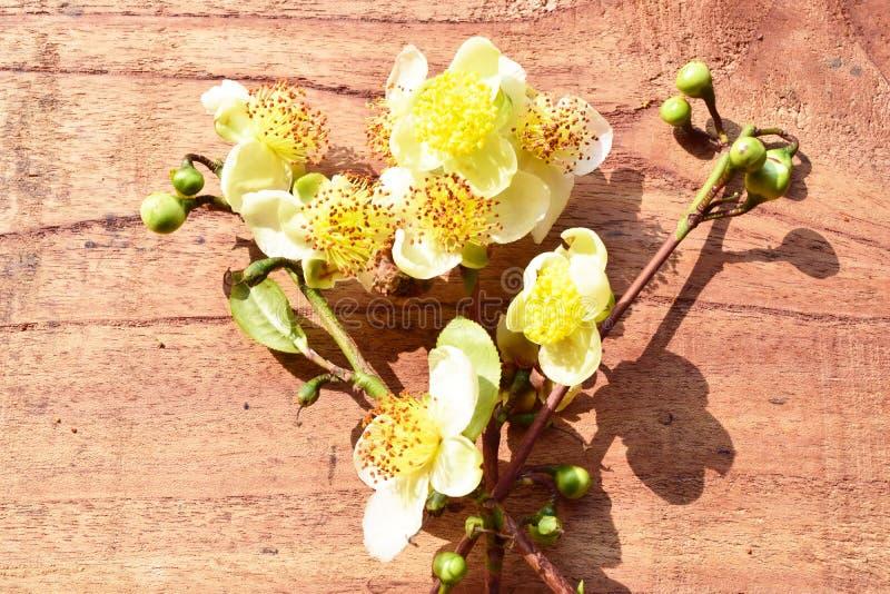 Chá bonito da flor imagens de stock royalty free