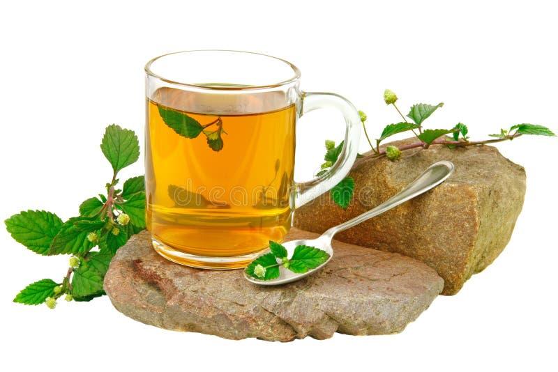 Chá com a erva doce asteca fotografia de stock royalty free