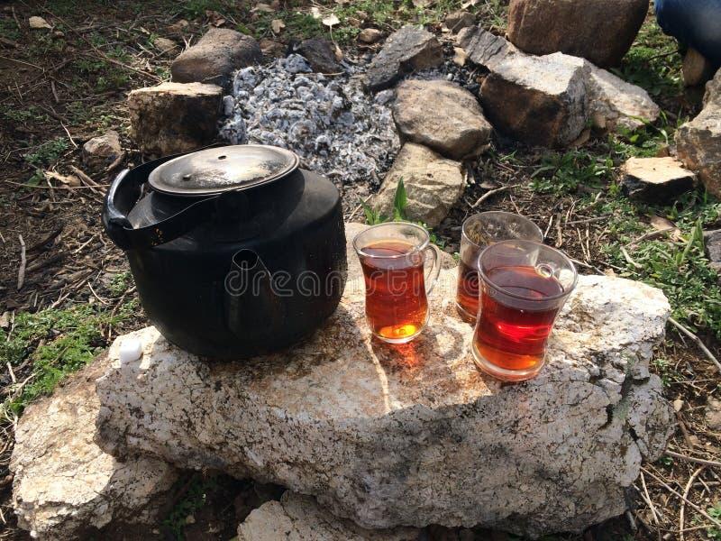 Chá com fogo da árvore imagens de stock