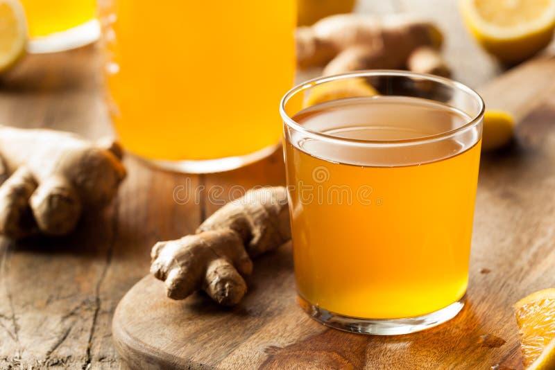 Chá cru fermentado caseiro de Kombucha imagem de stock