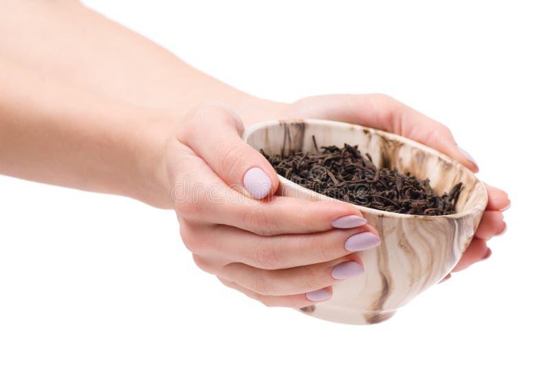 Chá da folha em um pial das mãos fêmeas imagem de stock royalty free