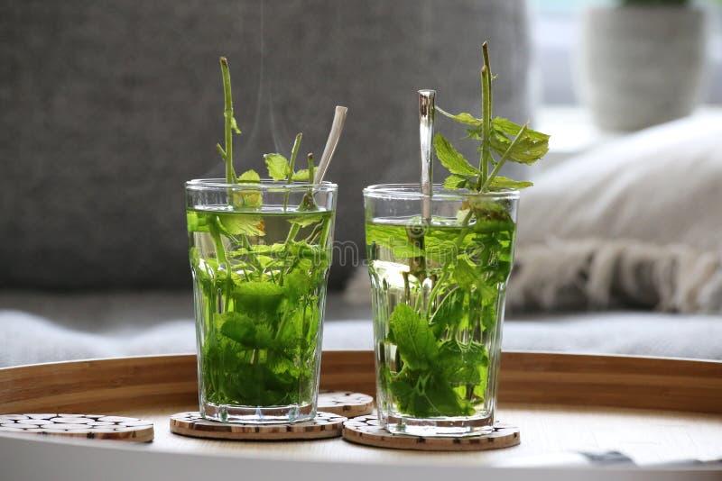 Chá da hortelã fresca imagem de stock royalty free