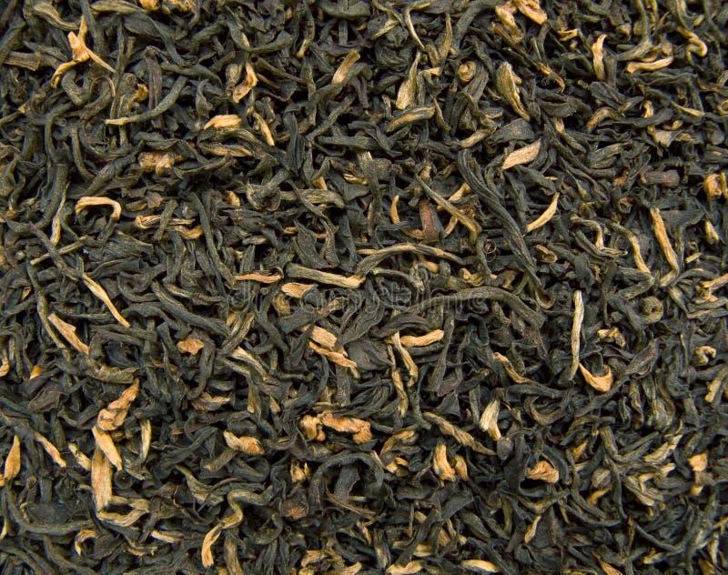 Chá de Assam fotografia de stock royalty free