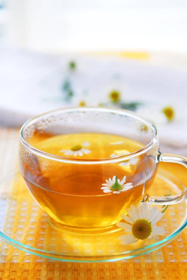 Chá de camomila imagens de stock royalty free