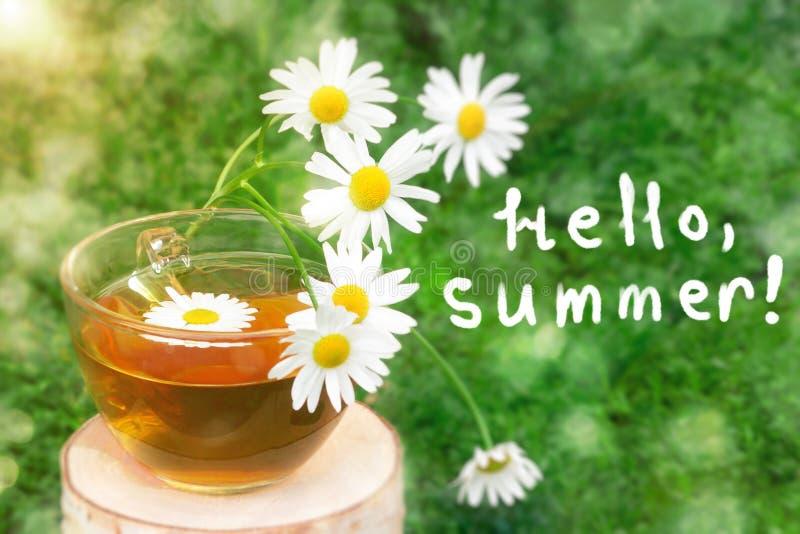 Chá de camomila em um copo transparente em um coto do vidoeiro no fundo das folhas da camomila no sol, com a inscrição olá!, fotos de stock