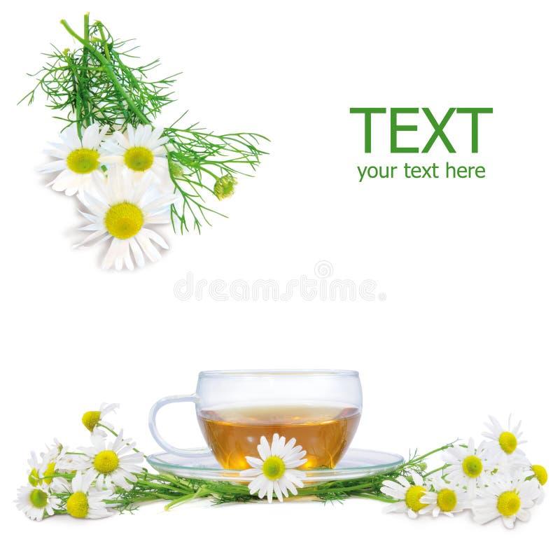 Chá de camomila fresco imagens de stock royalty free