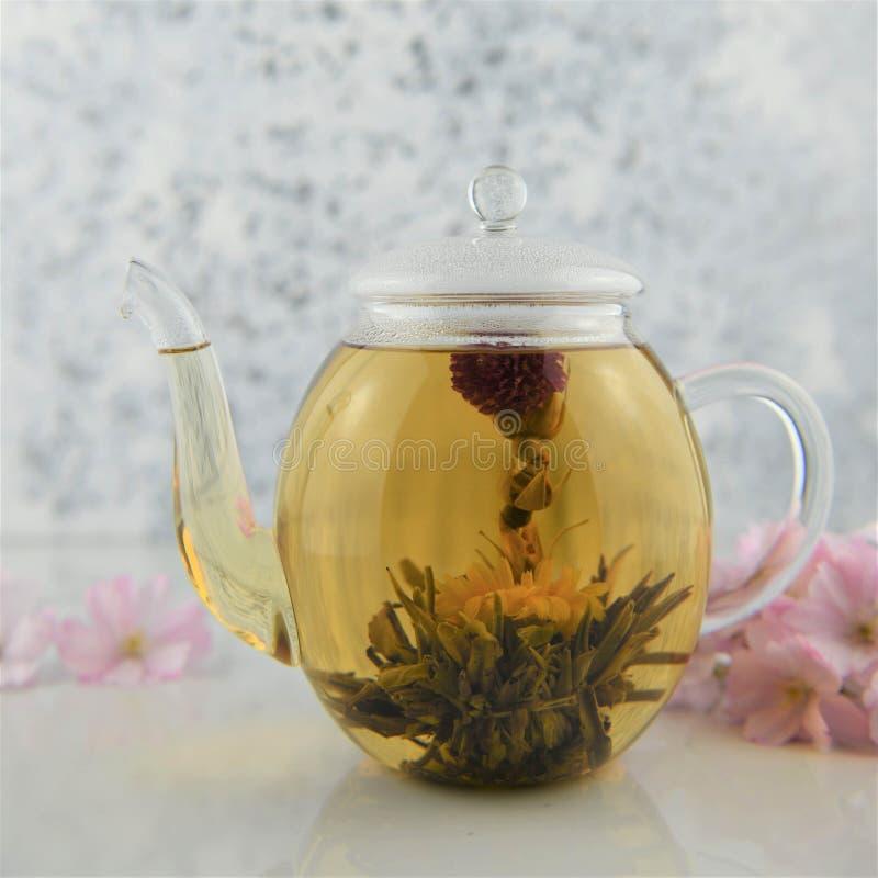 Chá de florescência no bule de vidro no branco imagem de stock royalty free