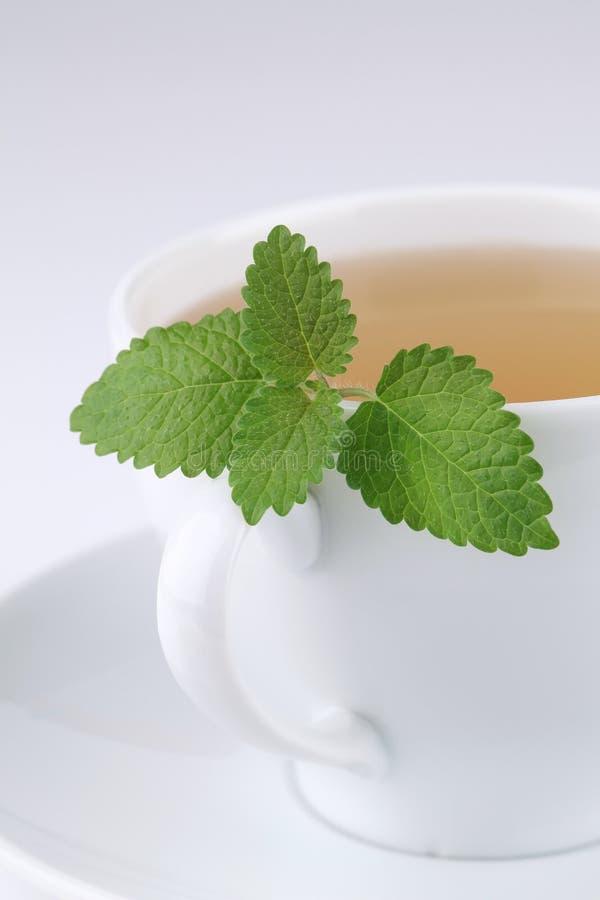 Chá do bálsamo de limão imagens de stock royalty free