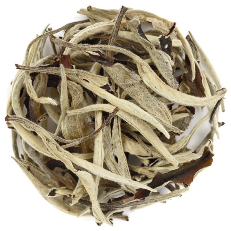 Chá do branco chinês de Yue Guang Bai imagem de stock royalty free