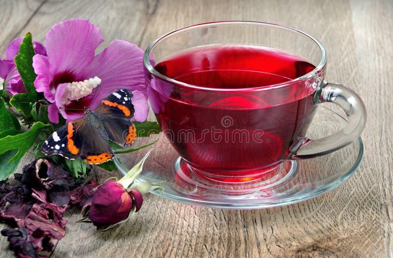 Chá do hibiscus em um copo de vidro em uma tabela de madeira entre as pétalas cor-de-rosa e o chá seco Flor do hibiscus Chá da vi foto de stock royalty free