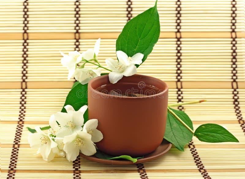 Chá do jasmim fotografia de stock royalty free